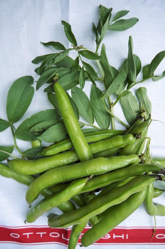 fava beans - trust in kim